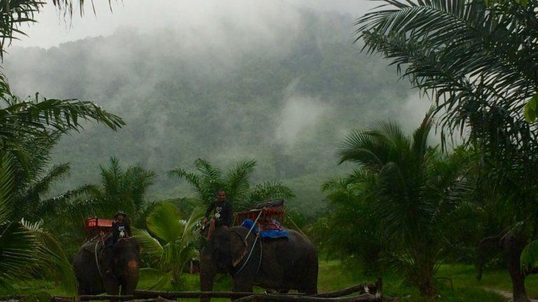 thai-fog